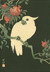 By Ohara Koson - Cockatoo on Pomegranate