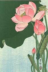 By Ohara Koson - Flowering Lotus