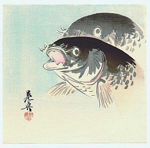 By Shibata Zeshin - Carp