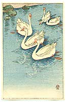 Swimming White Geese