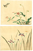 Tsunetomi Kitano 1880-1947 - Flower and Bird (2 sheets)