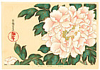 Sotatsu Tawaraya fl. ca. 1600-1643 - Peony - Rimpa School Series