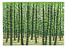 Fumio Fujita born 1933 - Bamboo Forest - E  (Limited Edition)