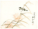 Suiun Komuro 1874-1945 - Bird on Autumn Weed
