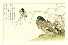 Utamaro Kitagawa 1750-1806 - Mallard and Kingfisher