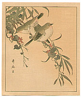 Utamaro Kitagawa 1750-1806 - Japanese White Eye