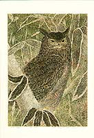 Yukio Katsuda born 1941 - Owl