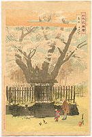 Gekko Ogata 1859-1920 - Ancient Cherry Tree  - Flowers of Japan