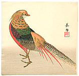 Biho  active  ca. 1900 - Chinese Pheasant