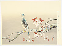 Kibo Kodama 1898-1971 - Bulbul on Cherry branch