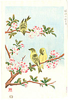 Shizuo Ashikaga fl.ca. 1950s - Japanese Quince and  Yellow Bunting
