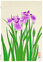 Nisaburo Ito 1910-1988 - Iris