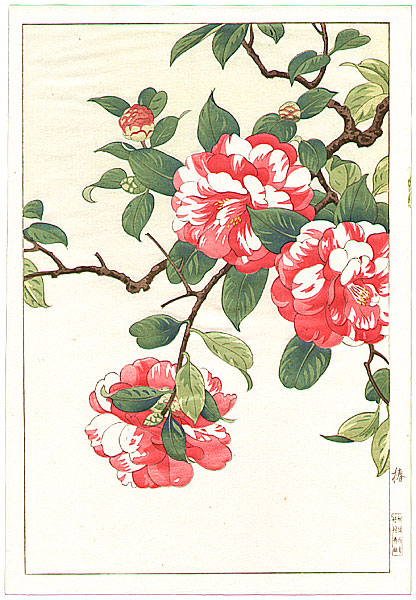 Hodo Nishimura active 1930s - Camellia