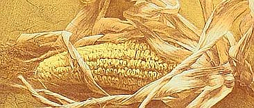 Hu Xinqiao born 1972 - Maize No. 4