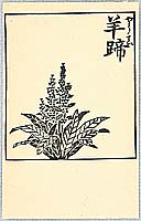 Unichi Hiratsuka 1895-1997 - Flowering Plant