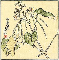 Zeshin Shibata 1807-1891 - Summer Flower