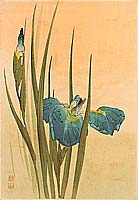 Sozan Ito 1884-? - Iris