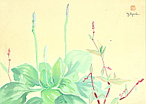 Yoji Oguri active ca. 1950s - Edible Spring Plants
