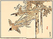 Bairei Kono 1844-1895 - Paradise Bird