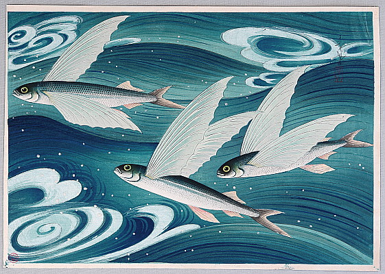 By Ohno Bakufu - Flying Fish