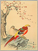 Hobun Kikuchi 1862-1918 - Two Chinese Pheasants