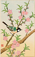 Shizuo Ashikaga fl.ca. 1950s - Peach Blossoms and Small Bird
