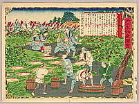 Hiroshige III Utagawa 1842-1894 - Harvesting Arrowroot  - Pictures of Products and Industries of Japan