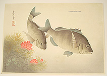 Bakufu Ono 1888-1976 - Black Sea Bream - Pictures of Fish in Japan Vol.3