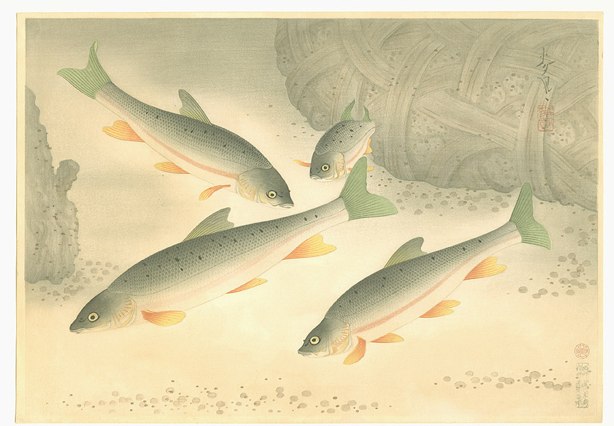 Bakufu Ono 1888-1976 - Dace - Pictures of Fish in Japan Vol.3