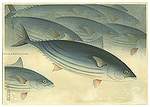 Bakufu Ono 1888-1976 - Bonito - Pictures of Fish in Japan Vol.3