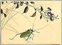 Hobun Kikuchi 1862-1918 - Grasshopper and Flowers