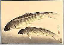 Bakufu Ono 1888-1976 - Pictures of Fish in Japan - Carp