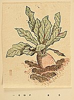 Unichi Hiratsuka 1895-1997 - The Poems and the Prints - Red Turnip