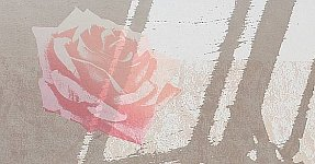 Chen Guangyong born 1973 - Shadow Series - Rose