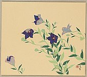 Chosei Miwa 1901-1983 - Blue Balloon Flower