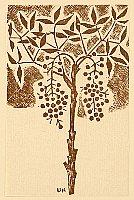 Unichi Hiratsuka 1895-1997 - Hanga Vol.8 - Nandin Tree