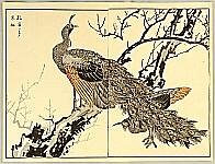 Bunrei Maekawa 1837-1917 - Peafowl and Plum Tree