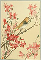 Unknown - Bird on Azalea