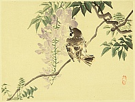 Bairei Kono 1844-1895 - Sparrow and Wisteria