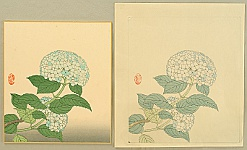 Nisaburo Ito 1910-1988 - Hydrangea - Watercolor and Trial Proof