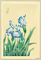 Eiichi Kotozuka 1906-1979 - Iris