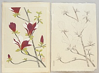Nisaburo Ito 1910-1988 - Magnolia - Trial proof prints and the original water color painting