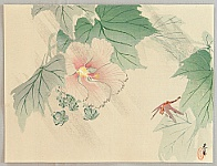 Shunkyo Yamamoto 1871-1933 - Rose Mallow and dragonfly