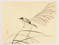 Gyokusho Kawabata 1842-1914 - Bird and Pampas Grass