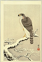 Hawk - By Koson Ohara