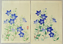 Nisaburo Ito 1910-1988 - Blue Balloon Flowers