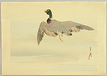 Gekko's Artwork - Flying Mallard