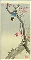 Koson Ohara 1877-1945 - Blue Bird on a Plum Tree