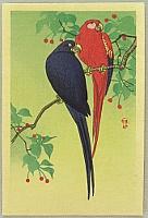 Two Macaws - By Koson Ohara