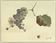 Mouse and Grapes